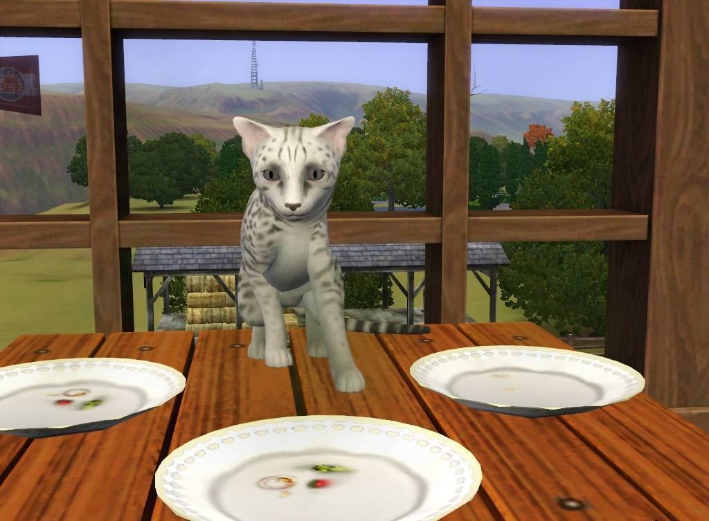 Как сделать котят в симс 3