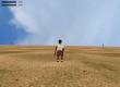 Adventures of Nyangi