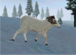 Rocky Mountain Trophy Hunter 3: Trophies of the West