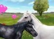Ellen Whitaker's Horse Life